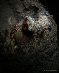 Octo trying to give me the look while he is hiding inside... by Larry Medenilla