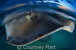 Sunset at Stingray Sandbar in Grand Cayman usually offers... by Courtney Platt