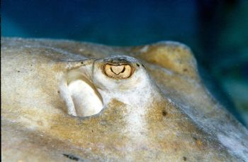 Eye to Eye.  Taken in Grand Cayman with Nikon N90s, 105mm... by Beverly Speed