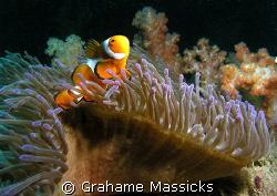 Found off Tioman Island.  Shot  with my Olympus 5060. by Grahame Massicks