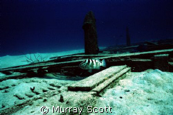 Alone  This was taken just off the coast of Nassau at a... by Murray Scott