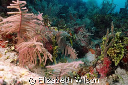 An Array Of Coral  My first Coral shot underwater...it ... by Elizabeth Wilson