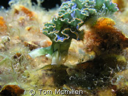 I like finding a place underwater and just waiting, you w... by Tom Mcmillen