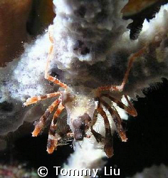 """Spider or Crab""? .. From this angle we can see something... by Tommy Liu"