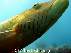 This photo taken by Canon Powershot A720is. This fish wa... by Albert Chuang