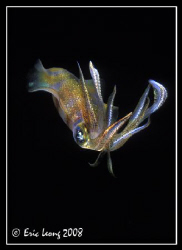 Squid by Eric Leong