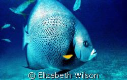 Blue On Blue  New Nikonos V and the strobe didnt work w... by Elizabeth Wilson