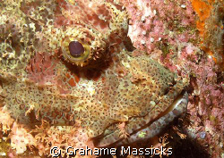 Perfect camouflage!  Found at Fan Canyon, off Tioman Isla... by Grahame Massicks