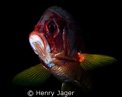 """""""Red Grouper"""" Taken at the Maldives with Olympus E-3, mac... by Henry Jager"""