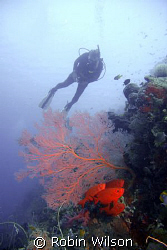Big eyes a sea fan and a diver by Robin Wilson