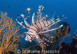 Found off Tioman Island, shot with my Olympus 5060 by Grahame Massicks