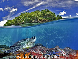 Turtle reef tropical fantasy :) by Jeannette Howard