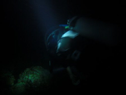 The night dive.. Moaboal cebu, Philippiines.. Casio exilim by Andrew Macleod
