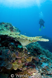 Tabletop coral with diver at Ngedebus coral garden by Wendy Capili