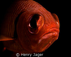 """""""BigEye"""" was shot in the Maldives at Dhuni Kolhu. Olympus... by Henry Jager"""