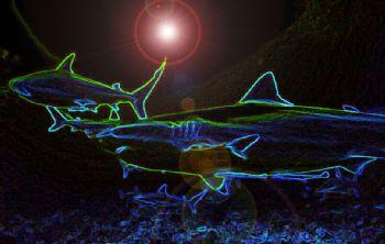 """""""Electrifying""""  Taken in Roatan, Honduras w/NikV, 15mm le... by Beverly Speed"""