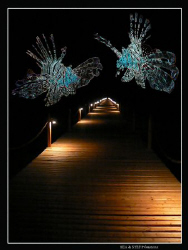 """""""Night dive"""" by Bea & Stef Primatesta"""