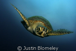 Taken whilst diving in the Coral Sea @ Lighthouse Bombie, by Justin Blomeley
