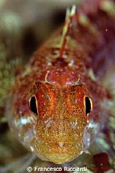 Wonderful little fish from Ullastres, Costa Brava, Spain by Francesco Ricciardi
