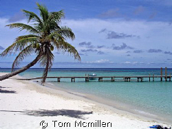 West Bay beach on the island of Roatan, great place to sn... by Tom Mcmillen