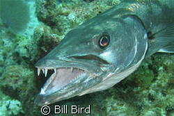This was taken at Little Cayman. by Bill Bird