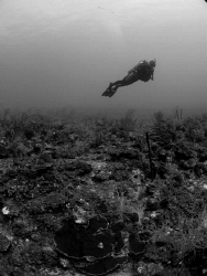 B and W of diver in Puerto Rico. by Juan Torres
