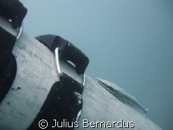remora on tank by Julius Bernardus