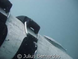 remora on tank by Julius Bernardus
