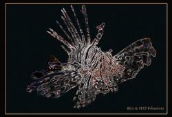 Pterois mutans by Bea & Stef Primatesta
