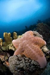 Starfish in Maratua. by Erika Antoniazzo