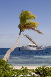 The Pelagian liveaboard seen from shore at Wakatobi Resor... by Allan Vandeford