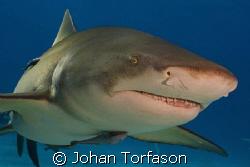 Do you want to dance? Lemon shark at tiger beach was smi... by Johan Torfason