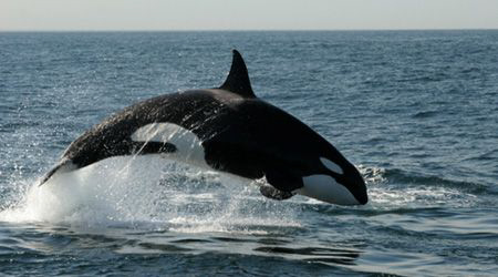 An incredibly lucky day whale watching in Monterey Bay.  ... by Dan Lee