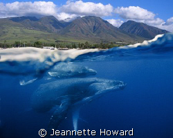 The wonder of Maui ~ Above and Below by Jeannette Howard