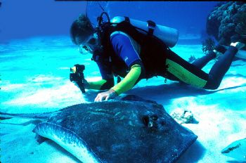 New PADI course...stingray petting. by Beverly Speed