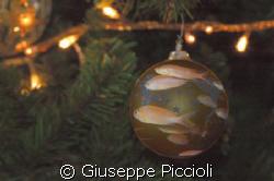 MERRY XMAS, everybody!!!! by Giuseppe Piccioli