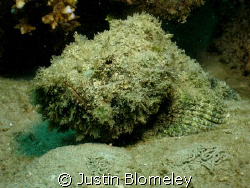 Taken on the Great Barrier Reef, Australia by Justin Blomeley