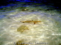 This baby shark was our visitor every day by Svetoslav Dimitrov