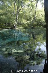 Ginnie Springs, FL. Camera Nikon D-200 by Ray Eccleston