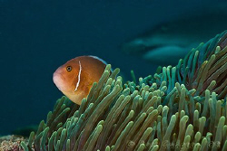 Is there something behind me?  Ningaloo Reef, Western Aus... by Ross Gudgeon