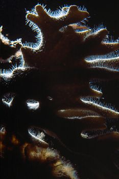 West End Grand Bahamas - Nikonos V w/ 1:2 extension tubes... by Ian Brooks