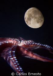Alien by Carlos Ernesto