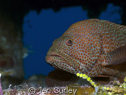Grouper found inside a wreck in the Bahamas.  Taken with ... by Jeri Curley