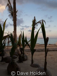 New Life...