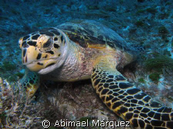 Turtle, Playa del Carmen by Abimael Márquez
