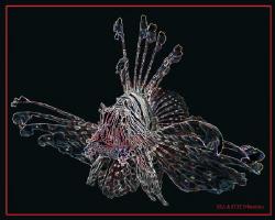 Pterois mutans II by Bea & Stef Primatesta