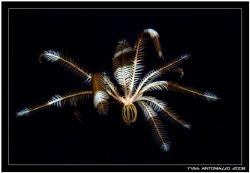 Flying away  Fuji S5 pro / 105mm by Yves Antoniazzo