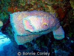 Azure vase sponge in Grand Cayman.  Photo taken with a Ca... by Bonnie Conley