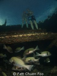 Two Worlds. Under the jetty, Kapalai, Sabah, Malaysia by Fatt Chuen Foo