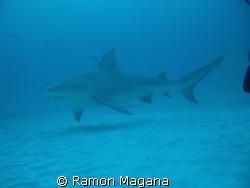 SHARK DIVING AT PLAYA DEL CARMEN... by Ramon Magana